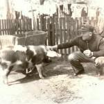 Schwein gehabt!, 1949